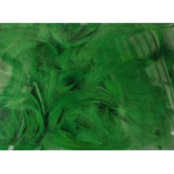 pióra w pudełku kolor zieleń