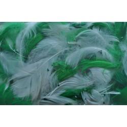 pióra w pudełku kolor zielono-biały