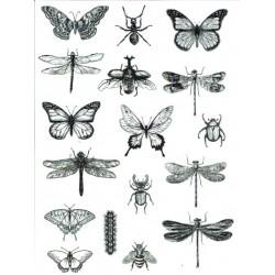 *** kalka do scrap`u P0063 owady