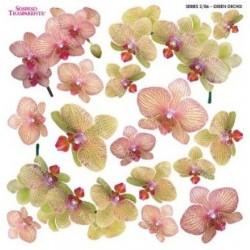 ***folia sospesso S2/06 orchidea