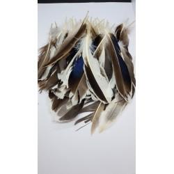 ***pióra kacze 15-20cm  dł.15-20 cm, 10 g