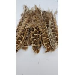 ***pióra kacze 15-20g dł.15-20 cm 5 g