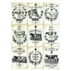 ***papier cienki A-5 5467 ramki z krowami vintage