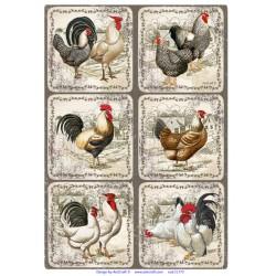 ***papier ryżowy 21*29,7 cm ramki,kury