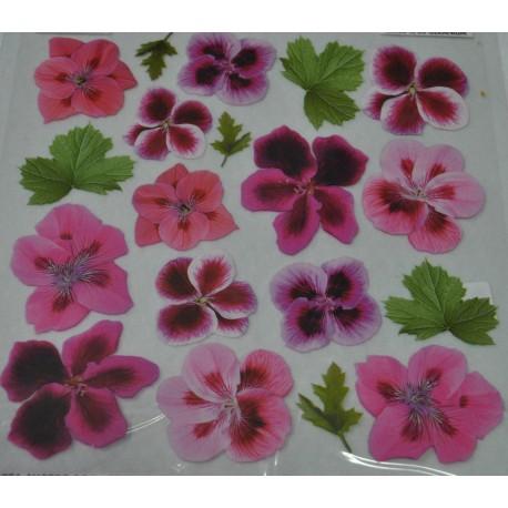 folia sospeso 4/03 geranium