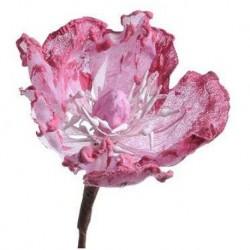 magnolia główka róża