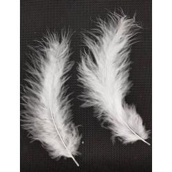 ***pióra 1-12 cm/50 szt białe