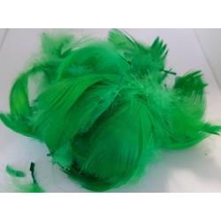 ***pióra w pudełku kolor zieleń